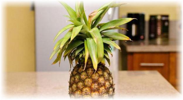 как быстрее дозреть ананас члена одной
