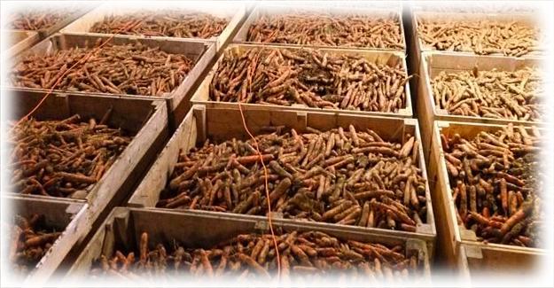 ящики с морковью